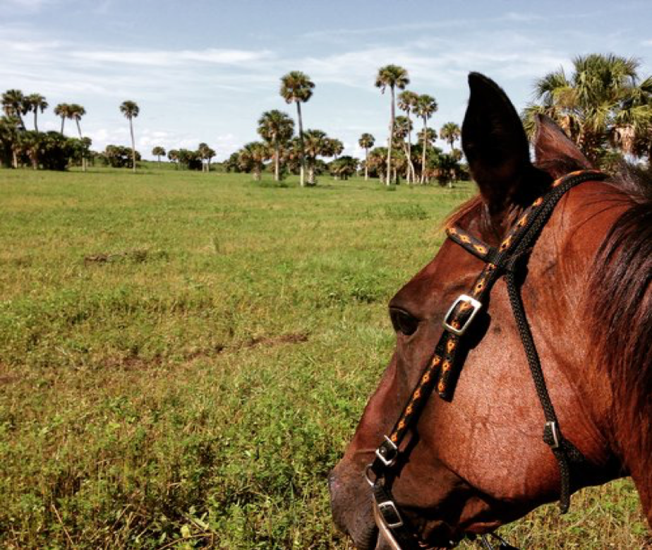 Things to do in Florida at Hidden Palms Ranch